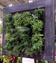 Herbs grown vertically in frame.