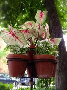 A trio of potted plants near a sidewalk