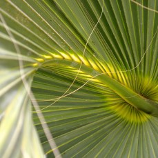Palm close-up