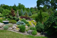 Shrubs and perennials