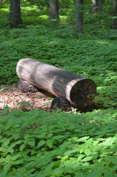 This log bench couldn't be of a simpler design or more beckoning.