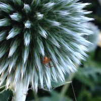 Politics around the globe (thistle)