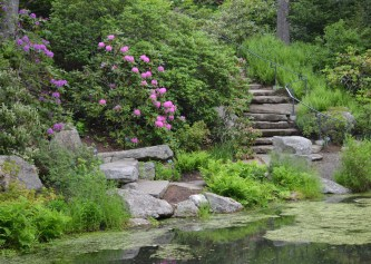 A pond at the base of a rhododendron garden in a woodland setting