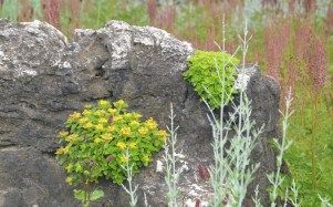 Small plants grow in crevices of a boulder.