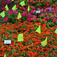 10 hottest and oddest 2017 gardening trends