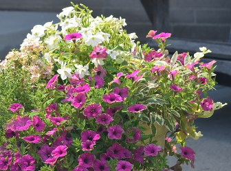 A close-up of flowering plants in a container planting