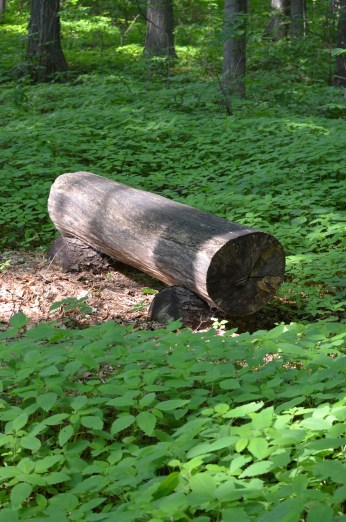 A log is used as a simple bench in a wooded garden.