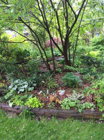 A backyard filled with plant specimens