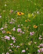 Wildflowers bloom in the meadows of this woodland garden.