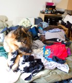Leo helps me put away laundry