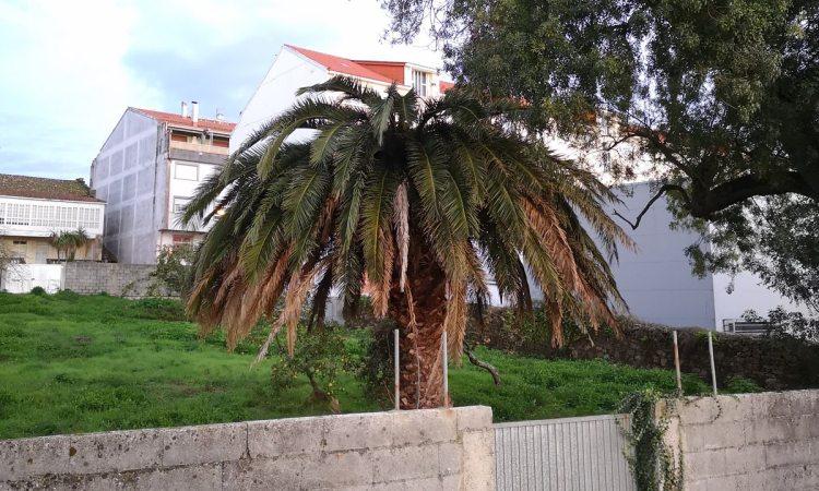 La palmera de Labarta el 21 de Octubre