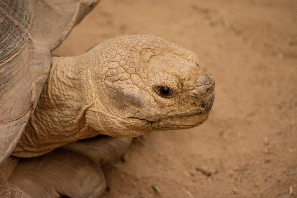You drink like a desert tortoise!