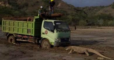 Komodo vs truk