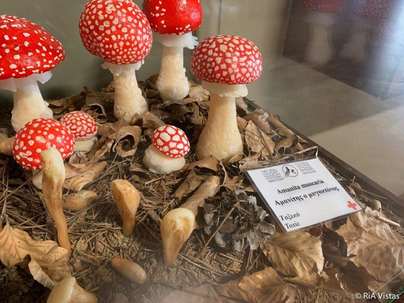 The Mushroom Museum Kalabaka_RiA Vistas
