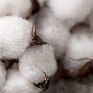 Fiocco di cotone proveniente da agricoltura biologica e organica