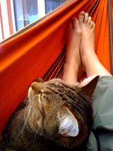 Cat in the hammock by 1ieve  - Ricardo Nuñez Blog