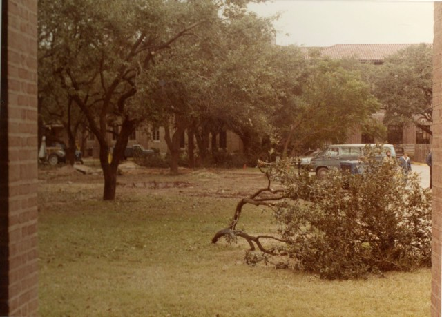 tree-moving-1983-4-044