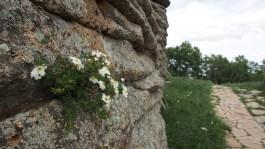 Flower on granite.