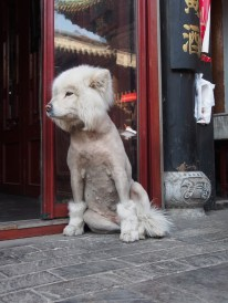 This furry friend might be considered a snack in some parts of China, but in this context she certainly wasn't on the menu. In fact she just had a bad hair day.