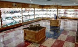 Exhibit Displays in the Main Gallery at the Rice Northwest Rock and Mineral Museum. Photography by Julian Gray.