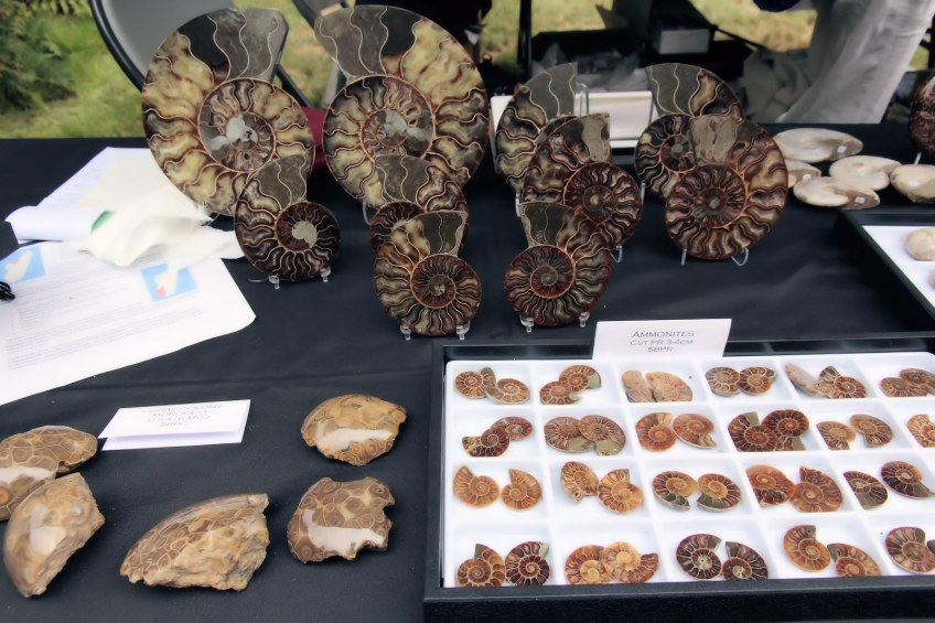Fossils for sale at vendor booth.