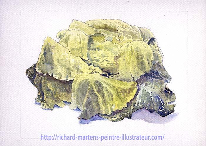 Aquarelle d'un chou, réalisé par Richard Martens.