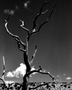 This is a previously unscanned, unprinted image from Villanueva State Park on my 1999 New Mexico photo tour.