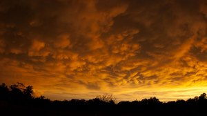 An impressive field of mammatus clouds formed at sunset after severe thunderstorms rolled through our area.