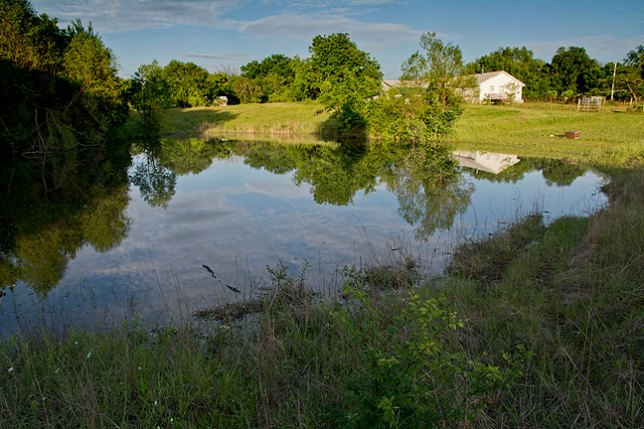As you can see, the pond is a pond again, thanks to abundant rain.