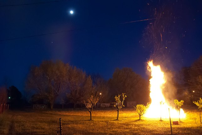 The moon and stars shine over my orchard as I burn my brush pile. The night was still and cold, and I felt so happy to be out there.