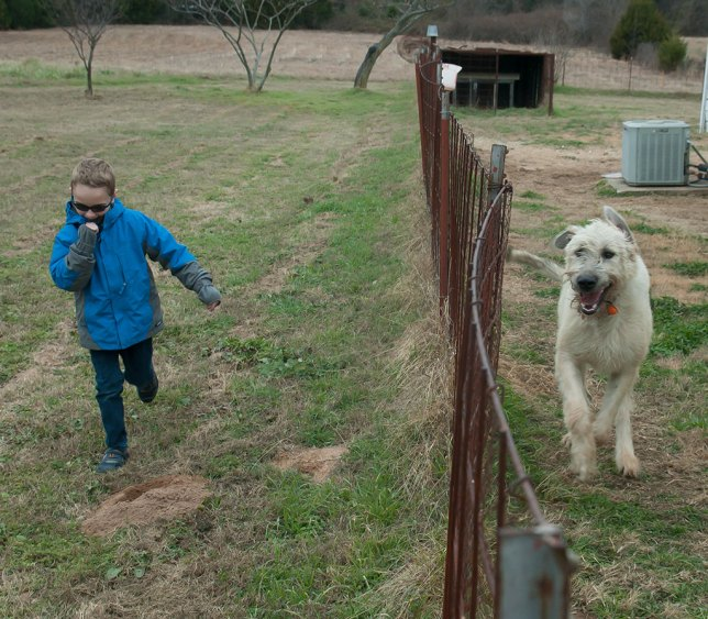 Paul and Hawken chase each other up and down the back yard fence.