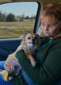 Abby holds Sierra the Chihuahua in her arms on the way to Arlington Animal Clinic.