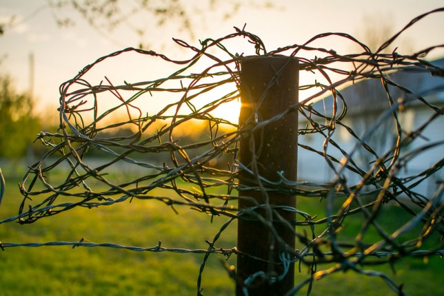 The barbed wire that has been tangled atop a fence post at the gate to the south pasture since I have been living here gives form to last night's vanishing light.