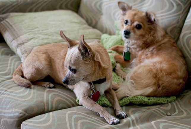 Max and Sierra sit on one of our couches last year. Both these great dogs have passed away.