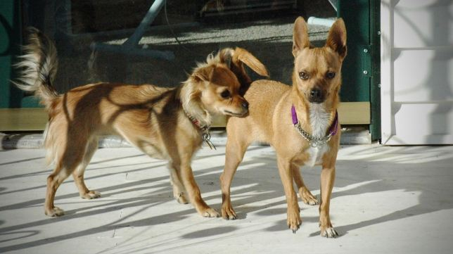 Sierra, left, greets Max on the day we brought him home from the animal shelter in January 2006.