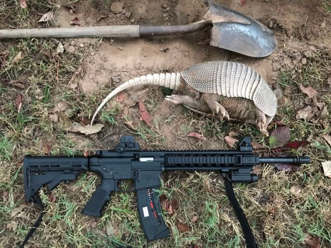 I capped this big ugly beast at about four this morning, using my Smith and Wesson M&P 15/22 loaded with CCI Mini-Mags. I had a cheap laser on the right rail that worked like a charm, but died during the hunt, so I need to replace it.