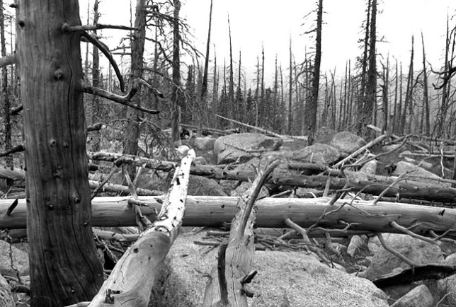 Fallen and burned trees, Lincoln Lake trail, Mount Evans Wilderness