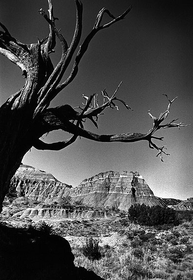 Tree and peaks, Lighthouse Trail, Palo Duro.