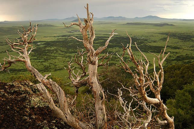 I had photographed this dead tree, at Capulin Volcano National Monument, in 1999, but on this occasion, after a thunderstorm, the light was entirely different.