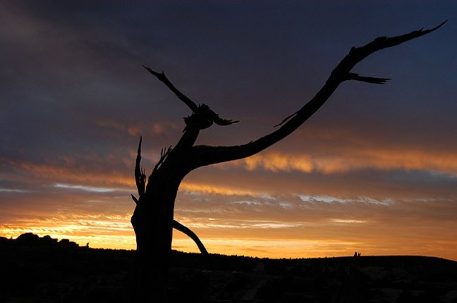 A dead tree stands against a beautiful after-sunset sky near Balanced Rock at Arches.