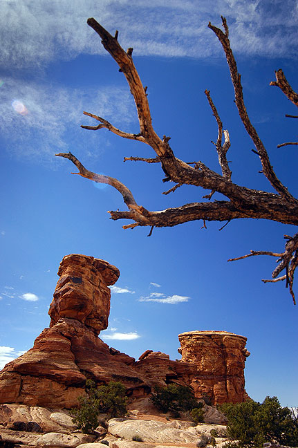 Dead tree and spires stand near the Confluence trail head.