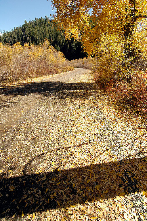 Leaves scatter across the road on a turnout near Chromo, Colorado.