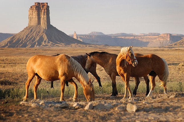Horses graze in the late afternoon sun with Chimney Rock, Colorado, in the background.