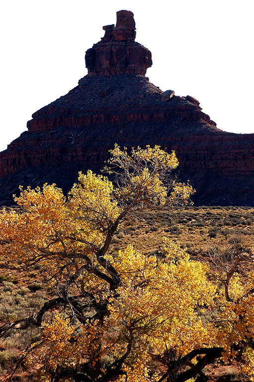 Golden foliage is set against a spire at Valley of the Gods.