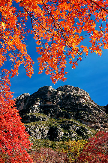 Morning light creates blazing colors on foliage in McKittrick Canyon, Guadalupe Mountains.