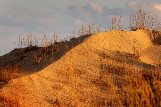 A ridge shines in maturing afternoon light at Monahans Sandhills State Park.