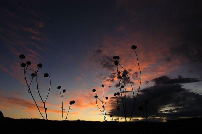 The sky takes on pre-sunrise light along U. S. 191 south of Moab, Utah.