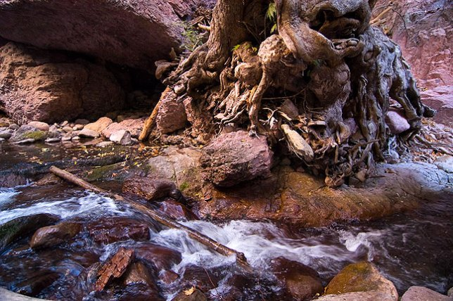 Whitewater Creek flows past a huge, mangled stump.
