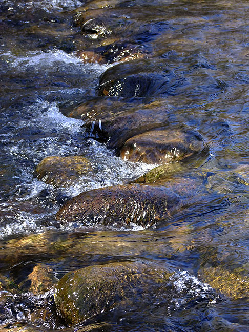 Stream, Gila National Forest, New Mexico; the water was extremely cold.