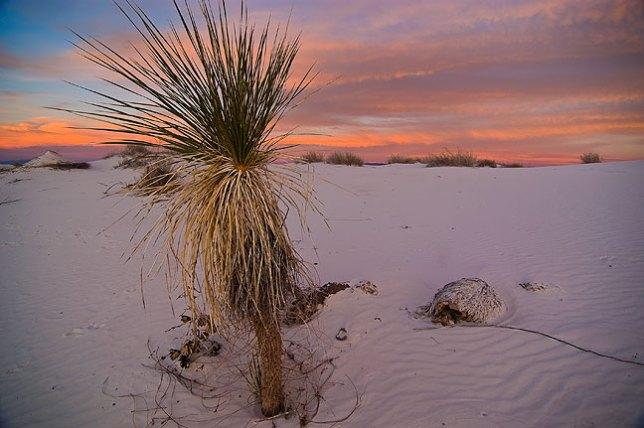Waining light at White Sands.